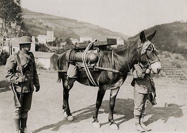 Ww1-mule.jpg