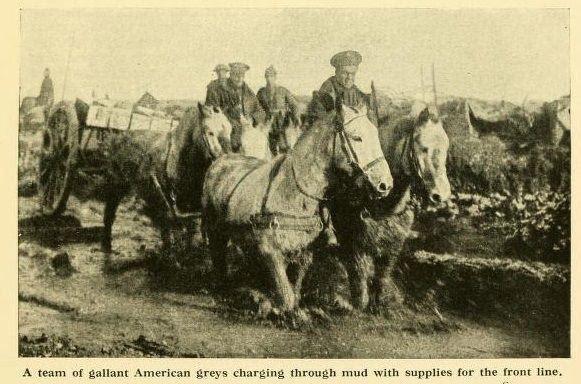 WW1-war.jpg